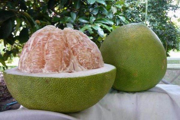 Что такое помело фрукт гибрид чего