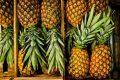 Миниатюра к статье Как правильно выбрать спелый и сладкий ананас в магазине. Хранение ананаса после покупки